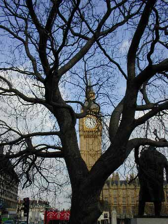 The houses of Parliament are surrounded by Indian bean trees.
