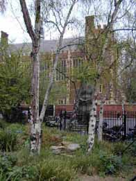 birches in Lincoln' Inn Fields