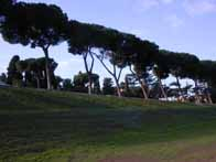 stone pines at the Circus Maximus